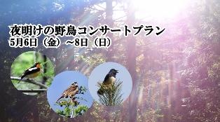 夜明けの野鳥コンサートプラン