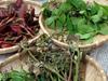 春の訪れを楽しむ 山菜・野草採集ツアー
