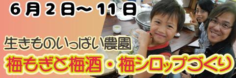 早川エコファーム共催梅もぎと梅酒・梅シロップづくりプラン