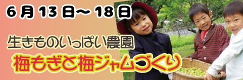 早川エコファーム共催 梅もぎと梅ジャムづくりプラン