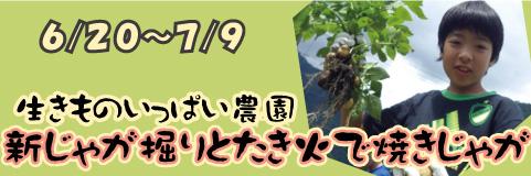 早川エコファーム共催 新じゃが掘りとたき火で焼きじゃがプラン