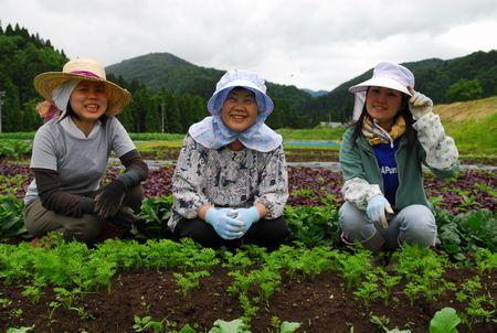 福井の田舎で農業ボランティア「ふるさとワークステイ」参加募集 福井県で農業体験ができます。農山村