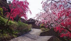 早川ぶらり町あるきプラン 桜咲く江戸の宿場町・赤沢