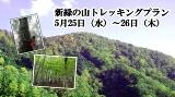 新緑の山トレッキングプrン