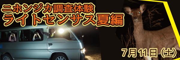 ニホンジカ調査体験 ライトセンサス夏編