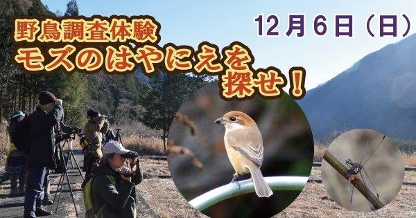 野鳥調査体験 モズのはやにえを探せ!