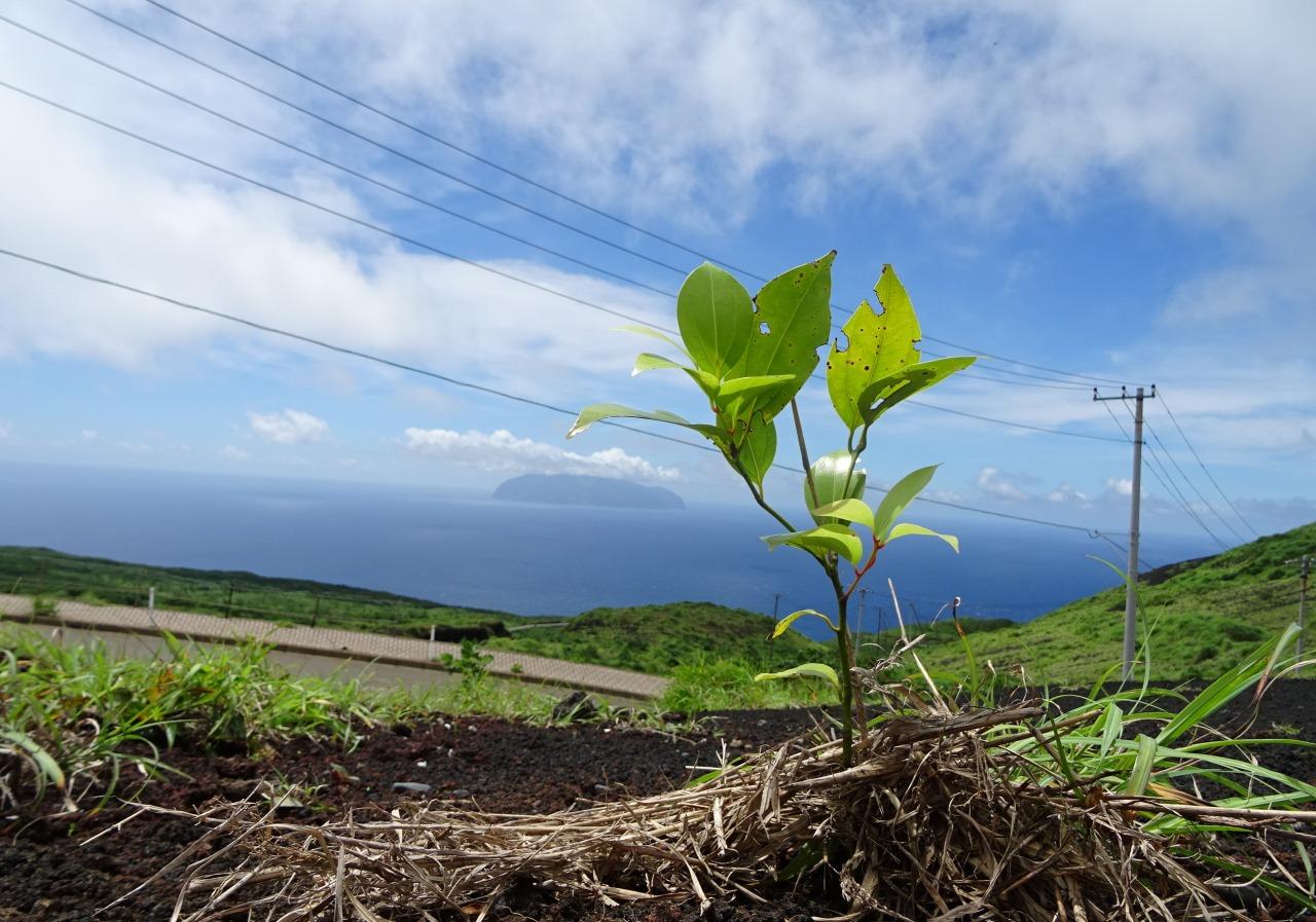 植林ボランティア参加者募集■三宅島に緑を
