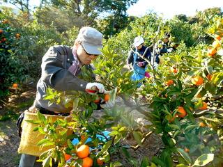 12月12日(土)〜13日(日)【収穫体験】田畑の楽校