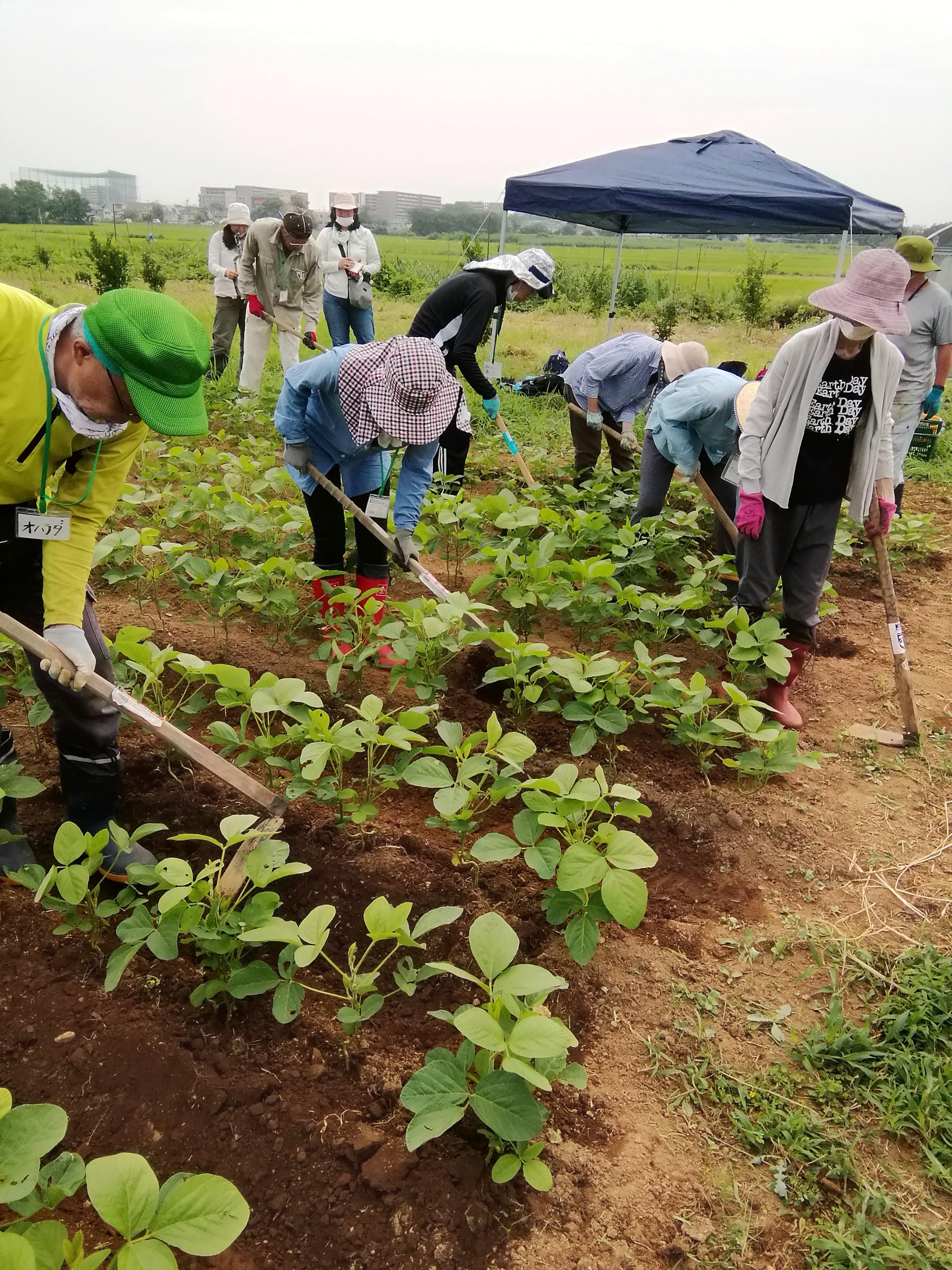 畑で実践!! <たね>からはじまる無肥料自然栽培
