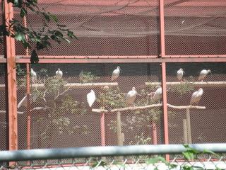 トキの島 森林の楽校2018夏(環境学実習)