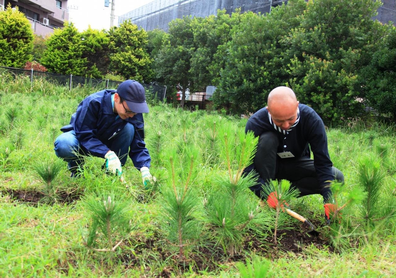 湘南で砂防林づくり 湘南海岸林ボランティア