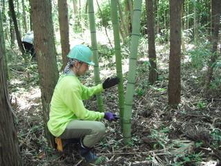 10月9日(金)〜11日(日)【トキの里山づくり】森林の楽校
